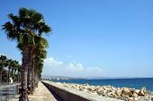 stock photo of larnaca  - Palm trees by beach in resort of Larnaca Cyprus - JPG