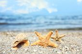 Beautiful Starfishes And Shell On Sand Near Sea, Space For Text. Beach Object poster