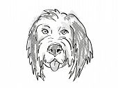 Retro Cartoon Style Drawing Of Head Of A Bernedoodle Or Bernese Mountain Poo  , A Domestic Dog Or Ca poster