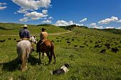 stock photo of cattle dog  - Two cowboys and there dog working with a large herd of cattle - JPG