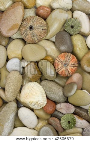Stone Sea Shell And Urchin