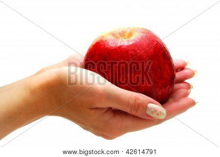 Hands Giving Apple