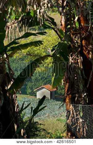 House In The Middle Of A Fig Plantation
