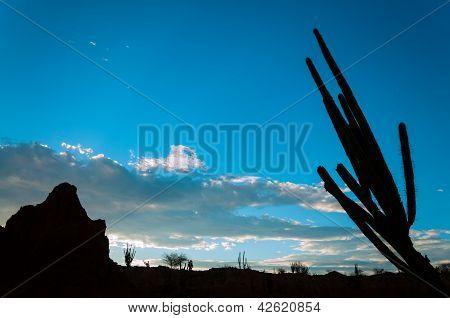 Desert Landscape Silhouette