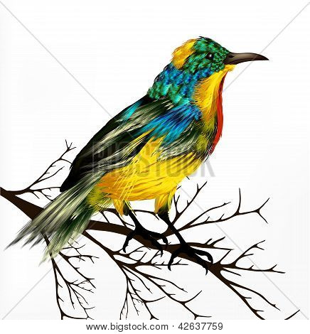 Colorful  Vector Realistic Tropical Bird Sit At The Branch On White