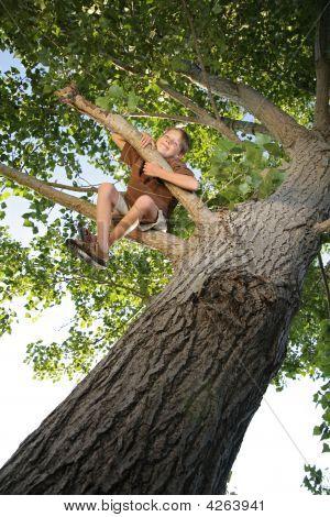 Treehappy