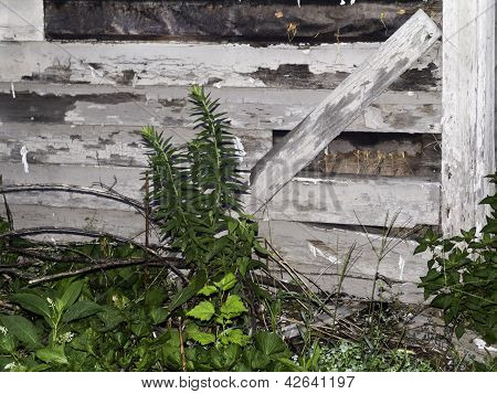 Crumbling Wooden Fence