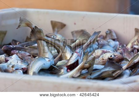 Fresh Fish In Shipping Container