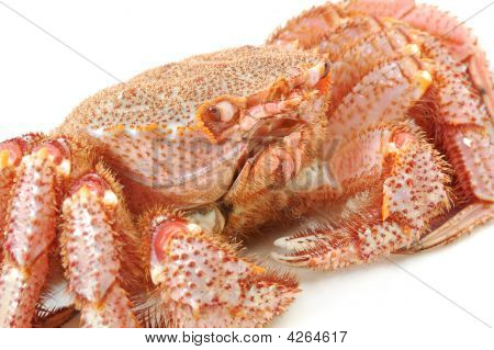 Alive Alaskan King Crab