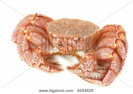 Alive King Crab