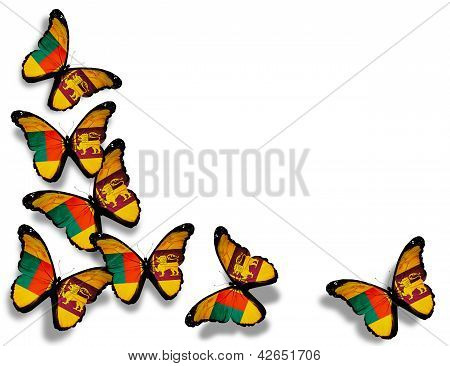 Sri Lanka Flag Butterflies, Isolated On White Background