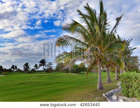 Palmeiras no campo de golfe