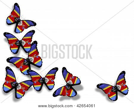 Swaziland Flag Butterflies, Isolated On White Background