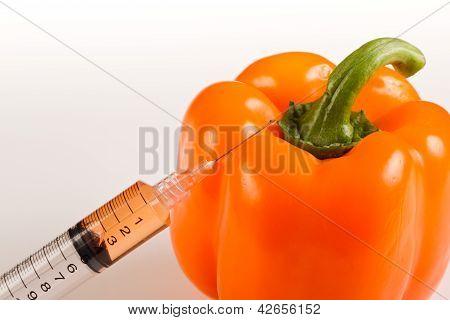 Gmo Bell Pepper