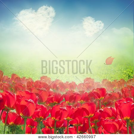 Campo de tulipa com nuvens de coração
