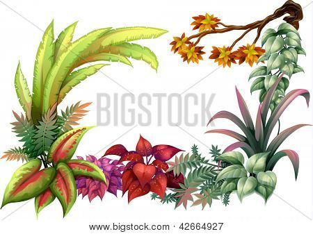 Illustration of leafy plants and a branch of a tree on a white background