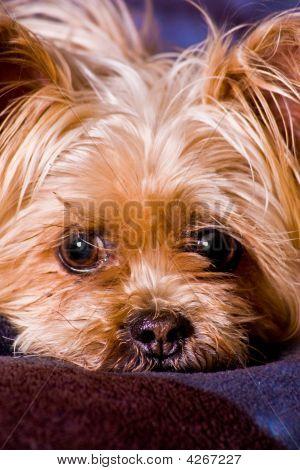 Cute Little Terrier Dog