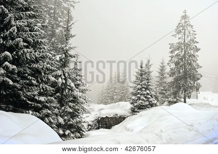 Winter foggy scene, christmas tree
