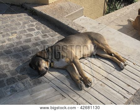 Stray Street Dog in Athens, Greece