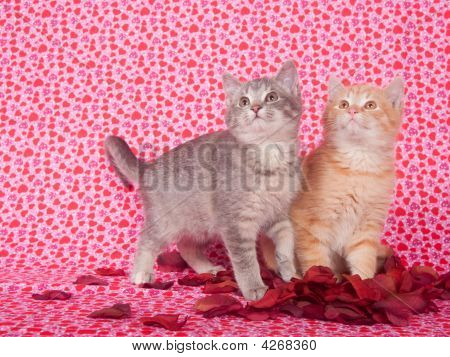 Kittens And Rose Petals