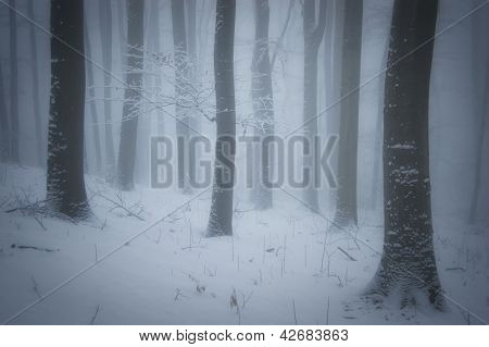 Winter in a forest with fog and blizzard