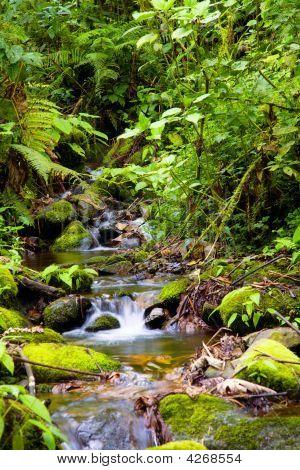 Arroyo en el bosque lluvioso