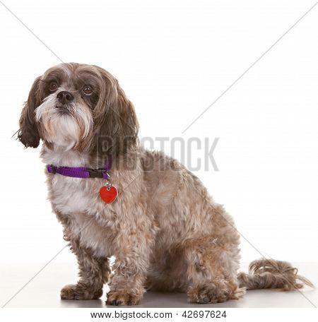 Dog Looking