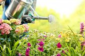 stock photo of horticulture  - watering flowers in garden centre - JPG