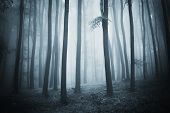 picture of rainy weather  - Dark scene of a forest with fog at evening - JPG