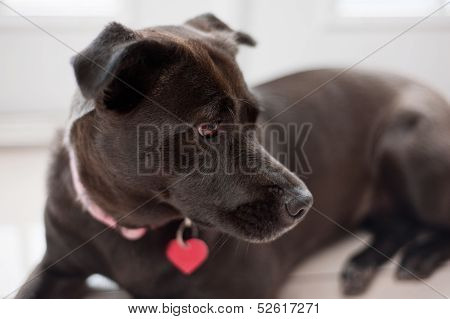 Black, Mixed-Breed, Female Dog