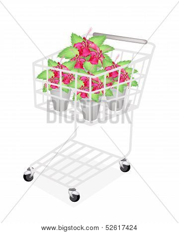 Red Hibiscus Flowers in A Shopping Cart