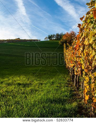 Empty vineyard