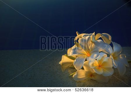 Frangipani Flower With Beautiful Light On Water Pool Use For Multipurpose Background