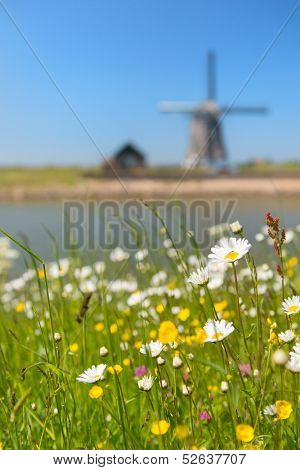 Windmill and wild flowers at Dutch wadden island Texel with focus on flowers
