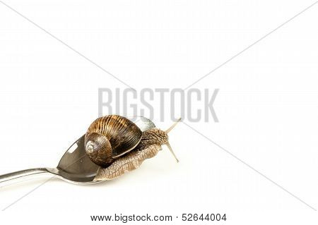 Escargot On A Spoon