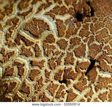Mushroom Brown Background