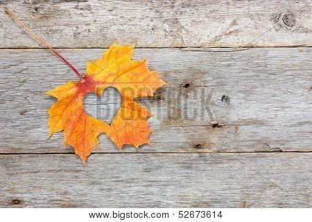 leaf with heart shape