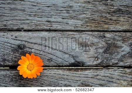Marigold On Wooden Table