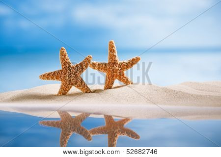 starfish  with ocean , beach, seascape and reflection, shallow dof
