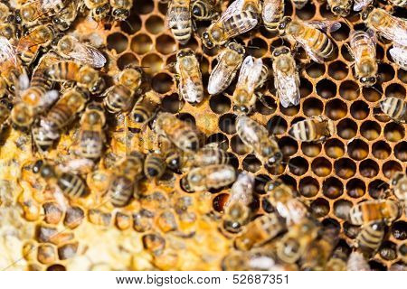 Directly above shot of honeybees swarming on comb
