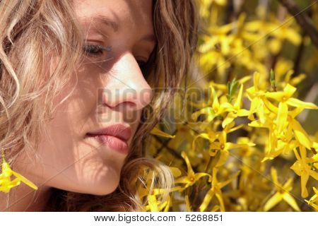 Blond Young Woman In Yellow Forsythia Flowers