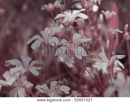 White Flowers With Pink Tonal Correction.