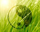 picture of karma  - yin yang sign on a natural green background - JPG