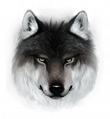 image of white wolf  - Painted gray wolf - JPG