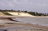 stock photo of rn  - Brazil RN Pititinga beach in foreground sand dune and palm in background - JPG