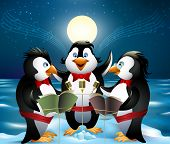 Night Song Of Penguins