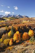 picture of mear  - Dallas Divide Uncompahgre National Forest Colorado USA - JPG