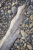 stock photo of driftwood  - Smooth stones on driftwood at Ruby Beach Olympic Peninsula Olympic National Park Washington - JPG
