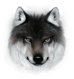 picture of white wolf  - Painted gray wolf - JPG