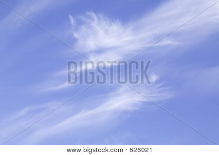 Feathered Clouds